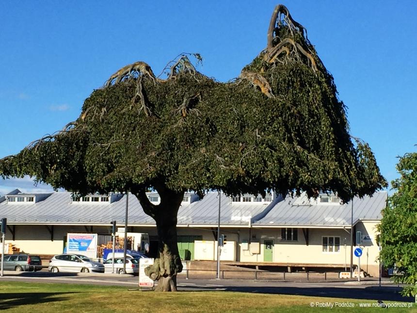 drzewa Kalmar