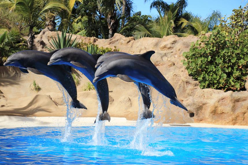 delfiny Loro Park