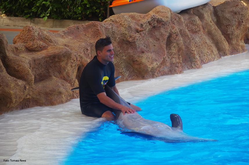 więź z delfinem