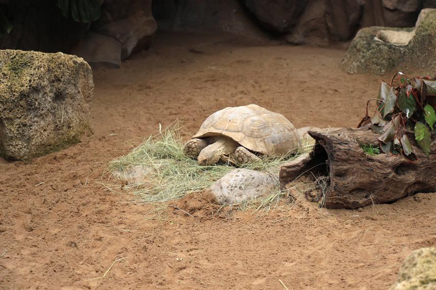 żółwie Loro Park