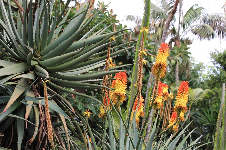 roślinność Loro Park