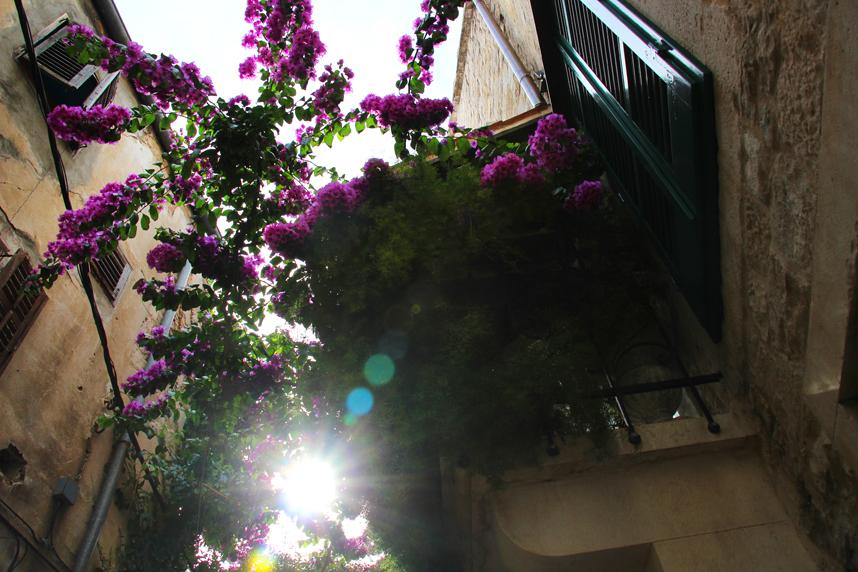 kwiaty Split