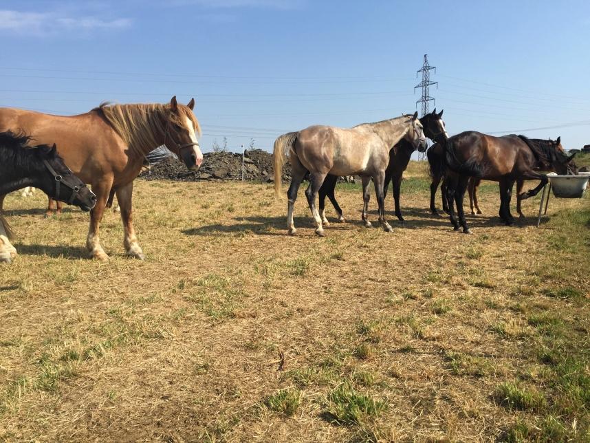 Ranch Milovice konie
