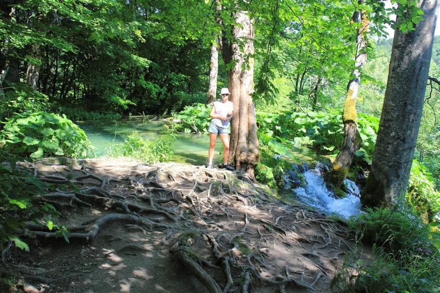 jeziora plitwickie st3 korzenie