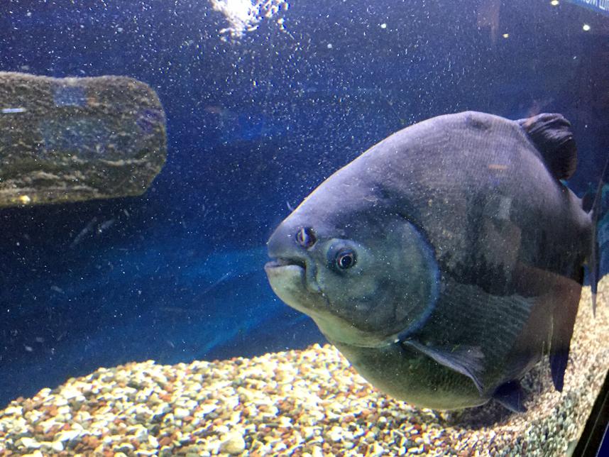 akwarium w Muzeum Oceanu Kaliningrad