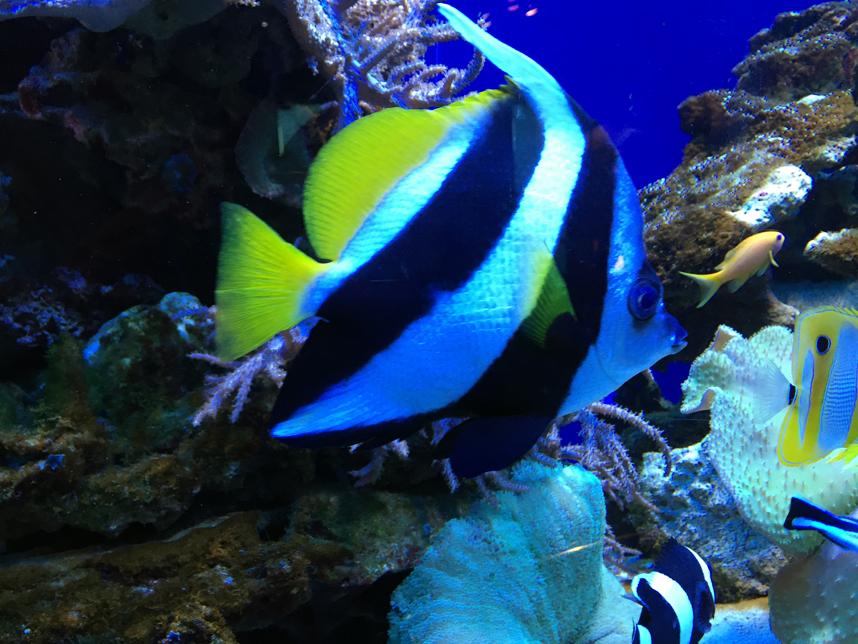 akwarium w Muzeum Oceanu kolorowa ryba