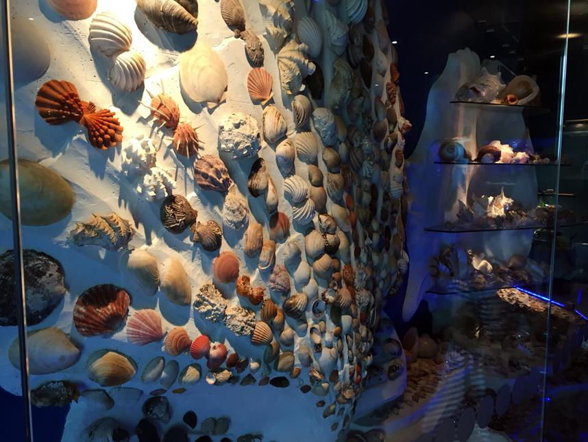 akwarium w Muzeum Oceanu muszle
