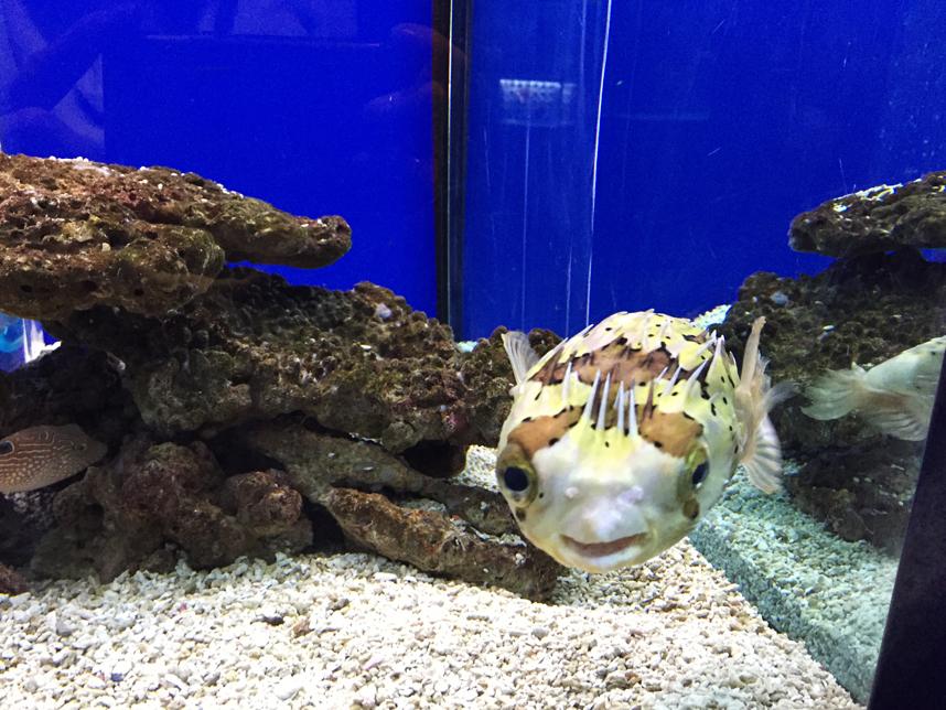 akwarium w Muzeum Oceanu w Kaliningradzie