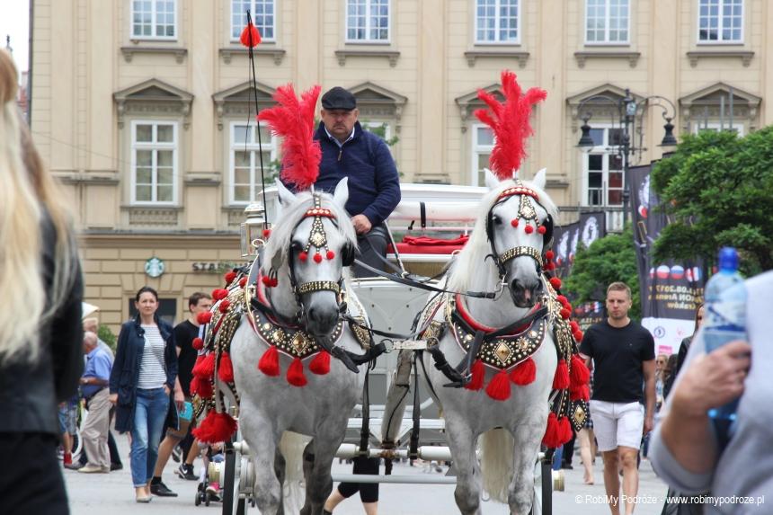 krakowskie konie