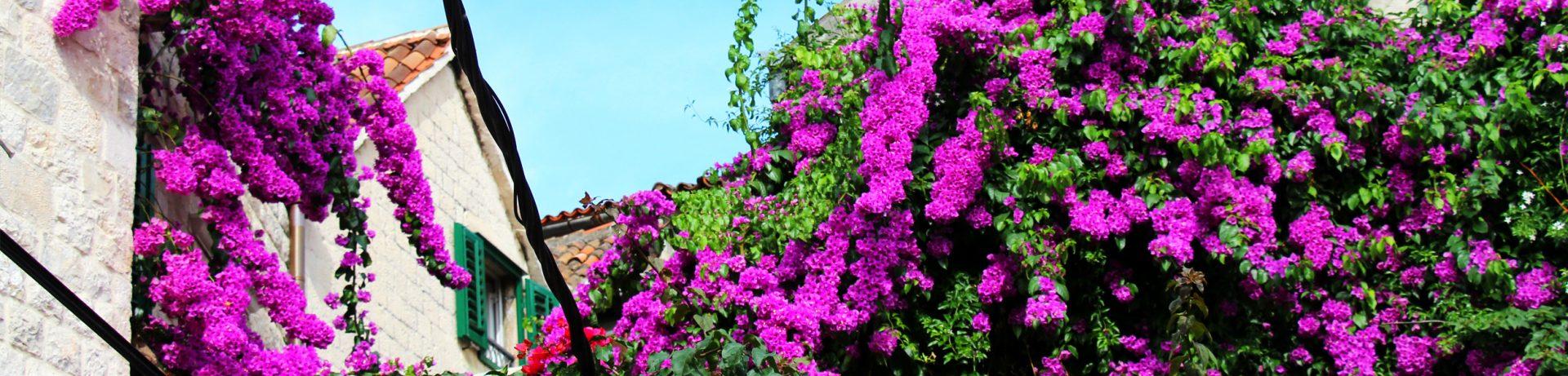 Kwiaty Splitu