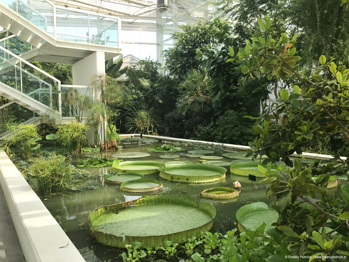 Orto di Botanico wPadwie