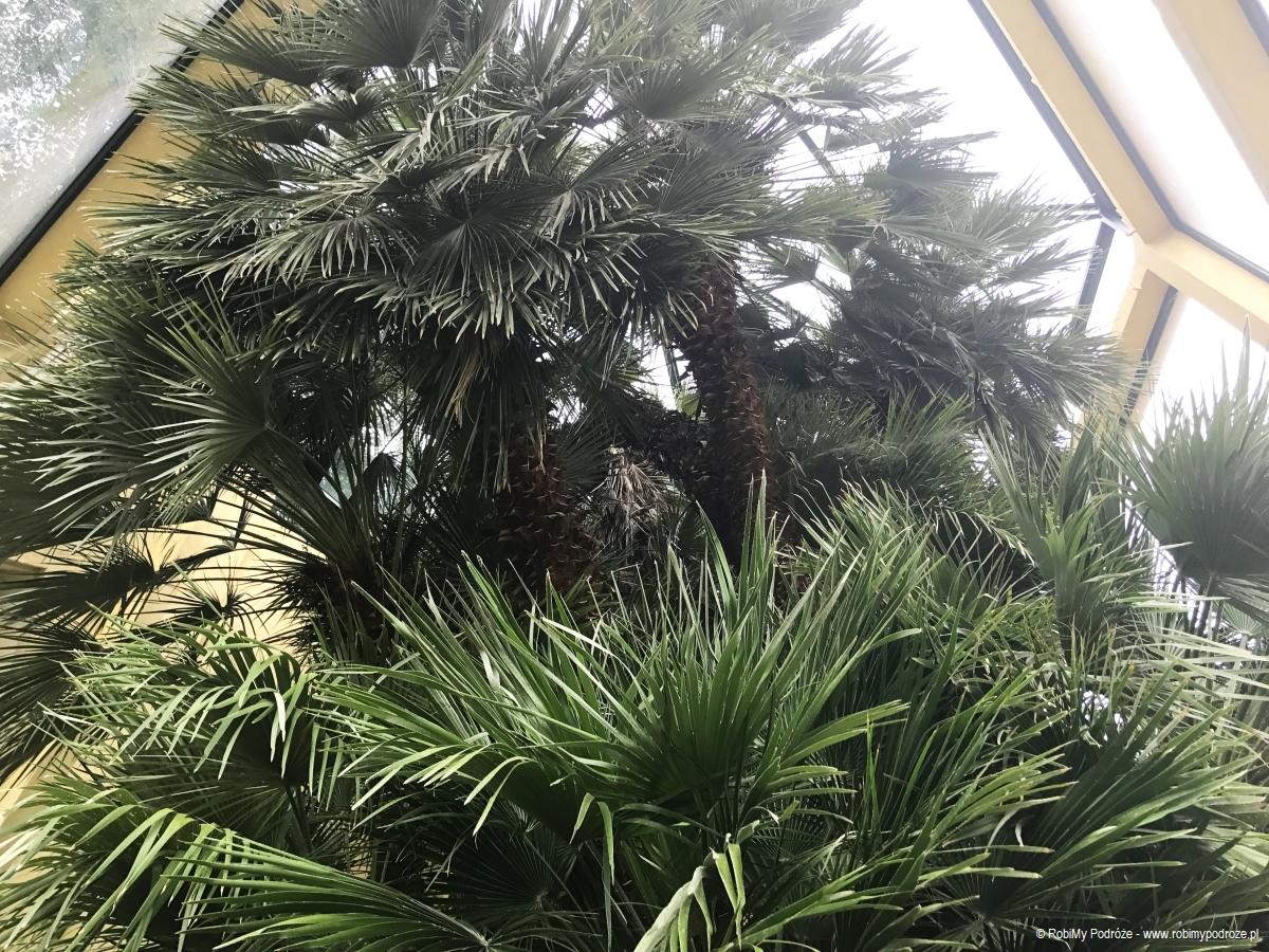 palma św.Piotra wPadwie