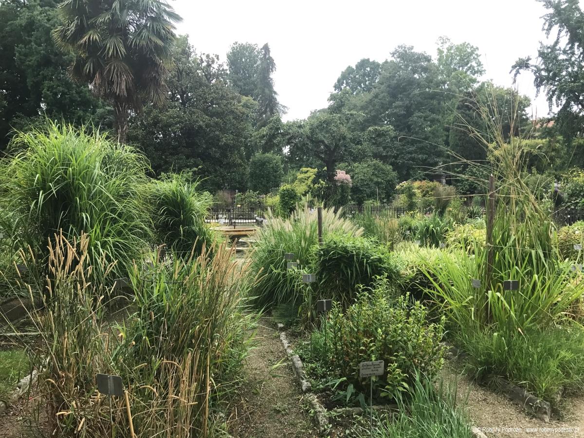 rośliny w Orto Botanico di Padova
