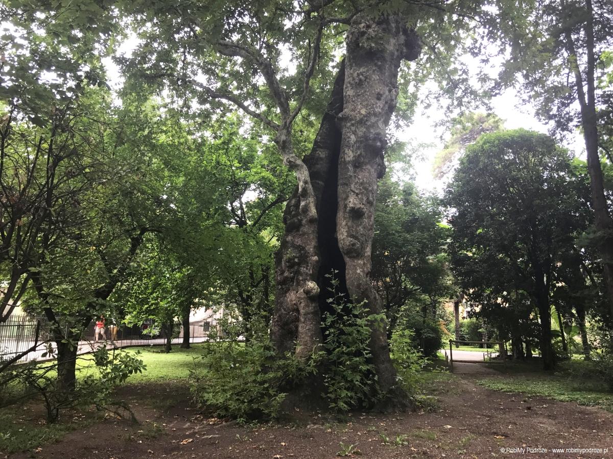 zobaczyć w Padwie Orto Botanico di Padova