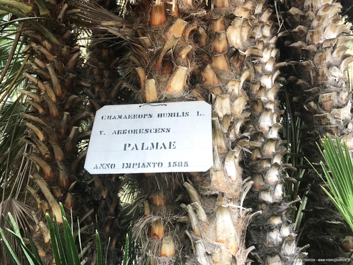 zobaczyć wPadwie starą palmę św.Piotra