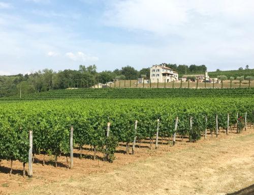 Winnica w Chorwacji, piękna Kabola na Istrii (Eurotrip #10)