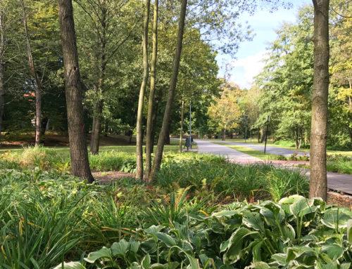 Park Centralny w Olsztynie – park w centrum miasta