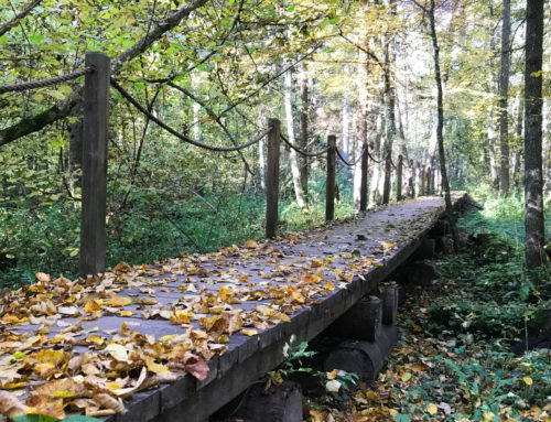Atrakcje Podlasia na weekend