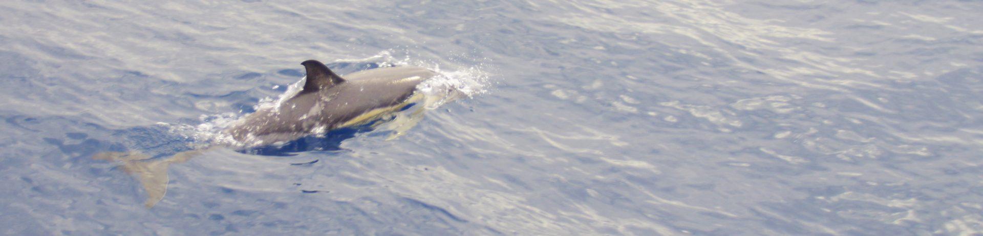 delfiny wOceanie