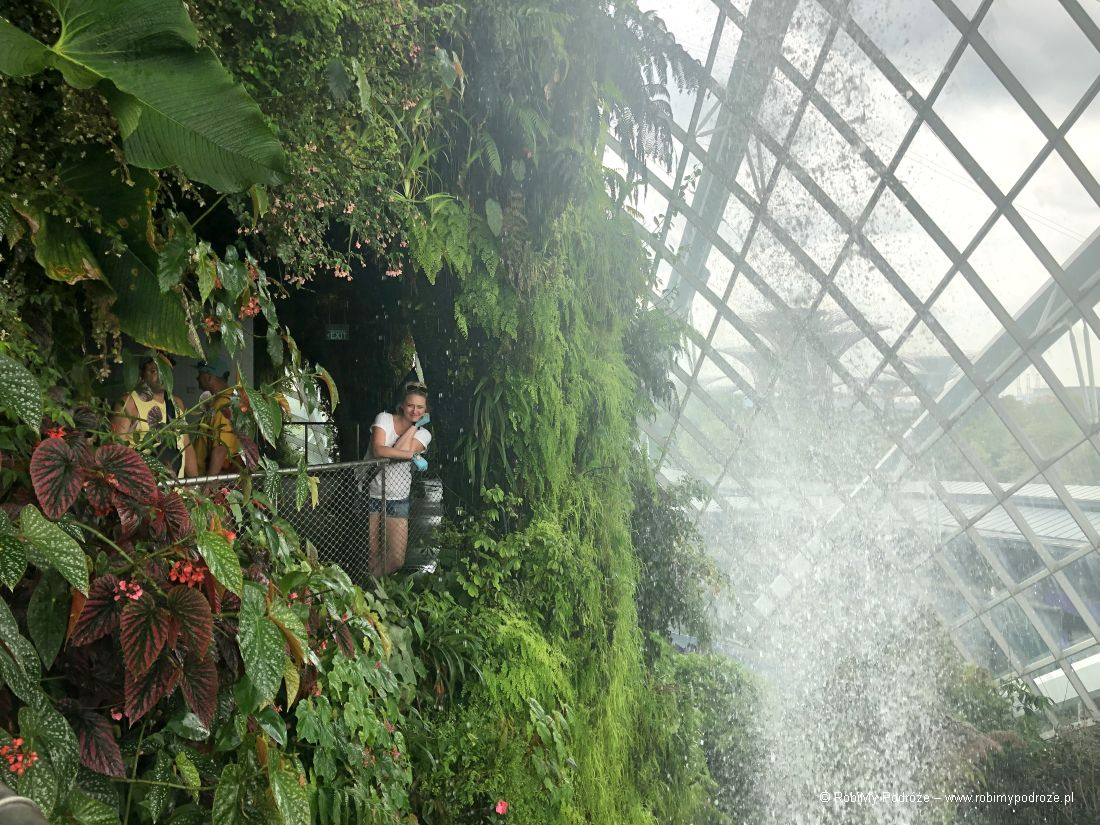 Cloud Forest wSingapurze