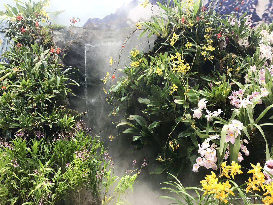 roślinność lasu mglistego wSingapurze