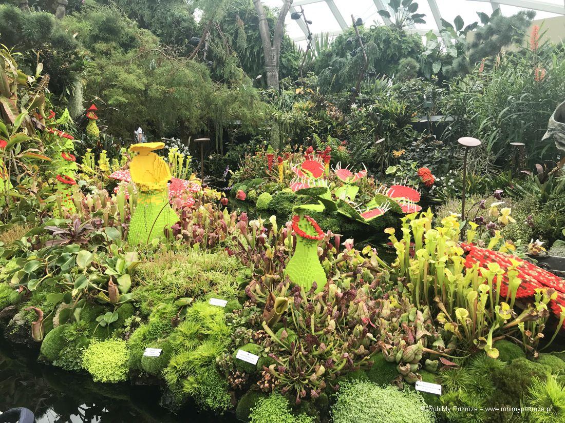 roślinność wCloud Forest