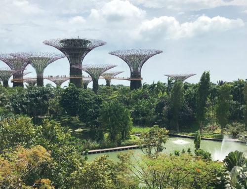 Jak zorganizować wyjazd do Singapuru