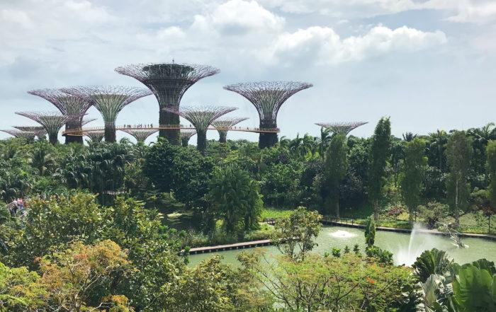 zorganizować wyjazd do Singapuru