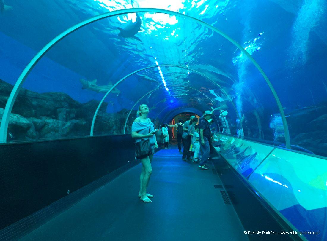 akwarium wSingapurze Plan zwiedzana Singapuru