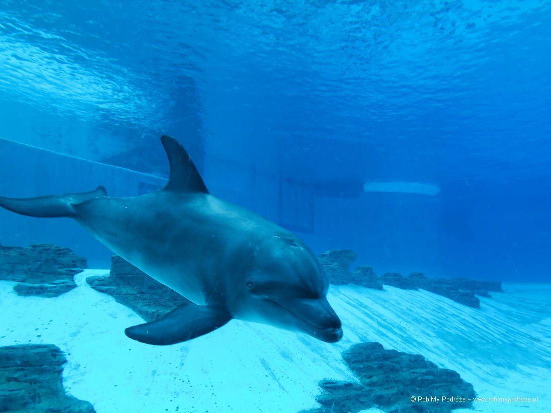 delfin wakwarium wSingapurze