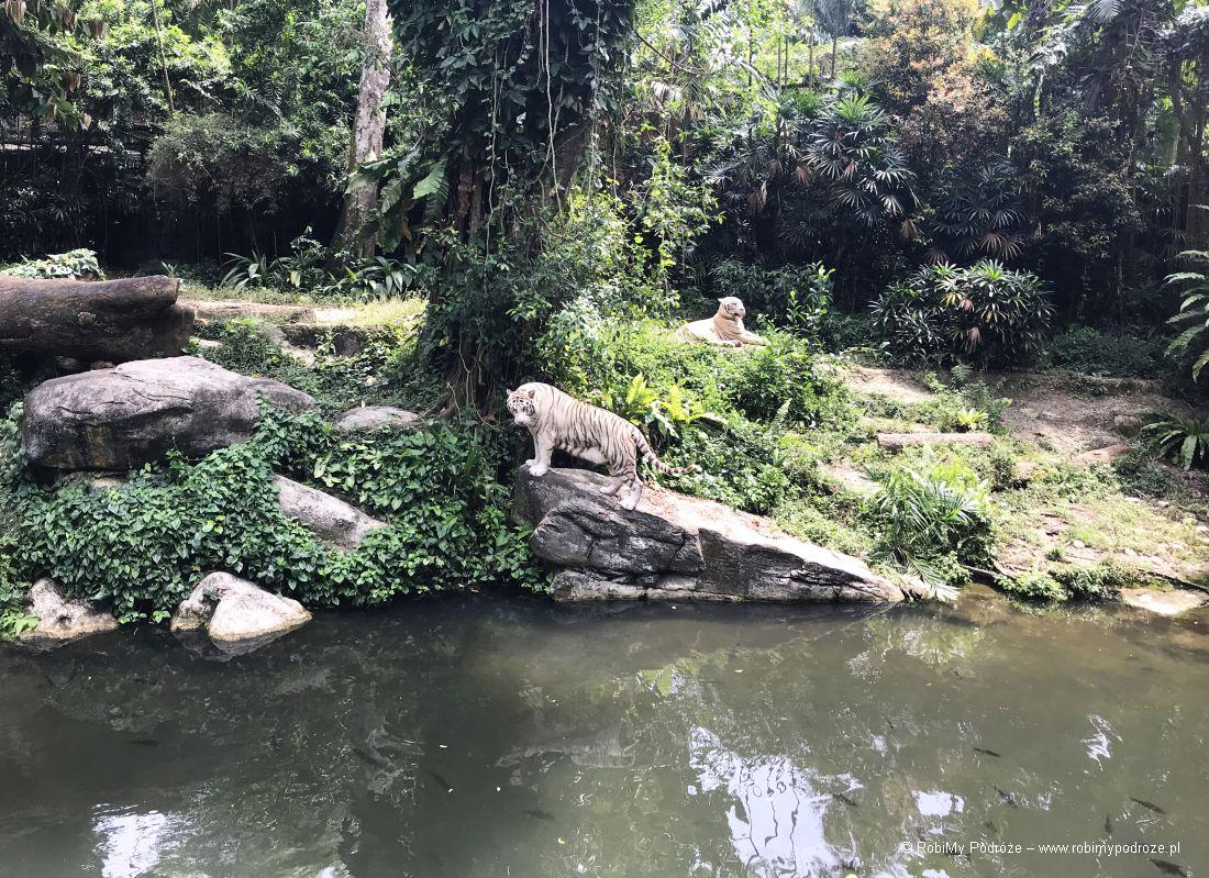 plan zwiedzania Singapuru - ZOO
