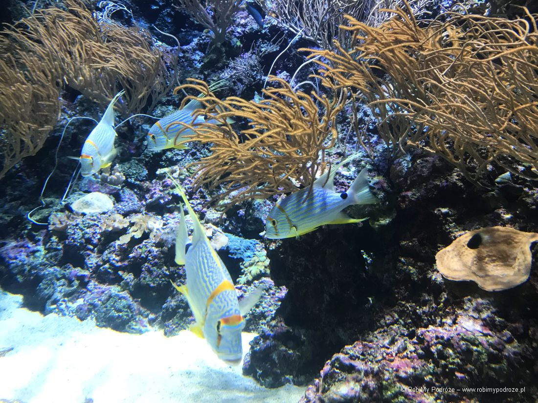 ryby wakwarium