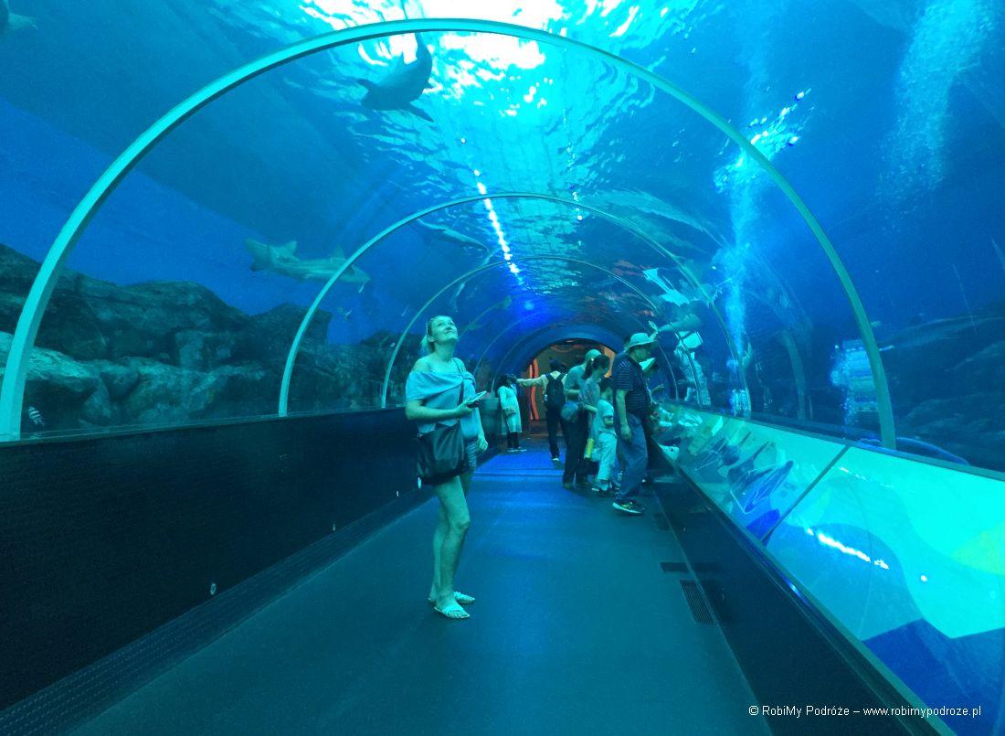 tunel zrekinami naSentosie