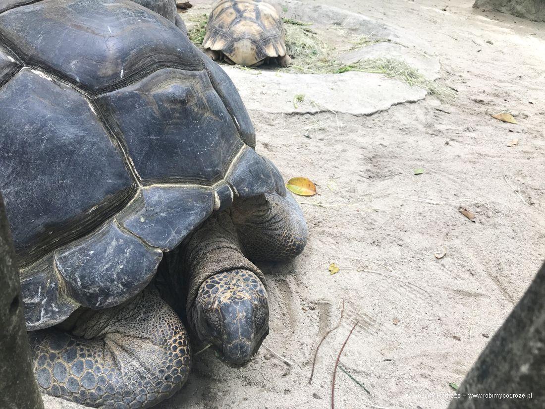 zoo wSingapurze - żółw