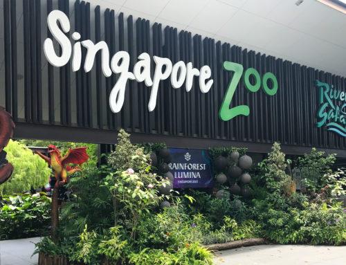 Bardzo ludzkie Zoo w Singapurze