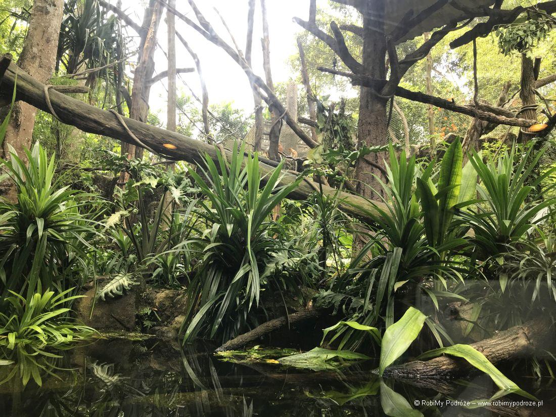 zoo wSingapurze - małpy 2