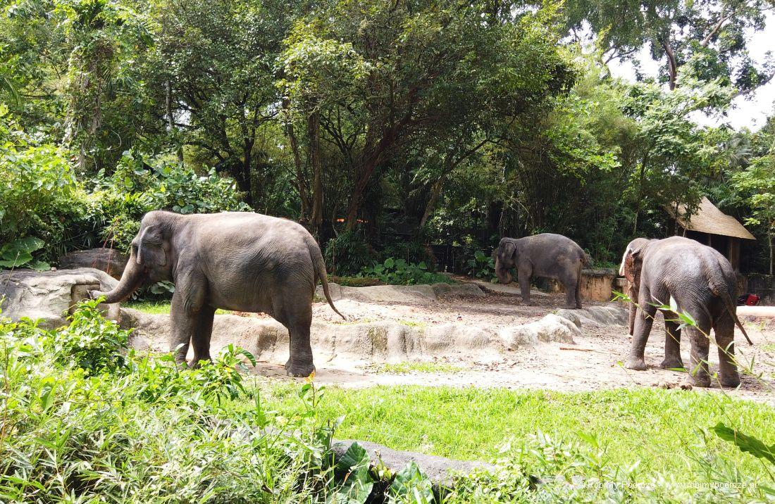 zoo słonie