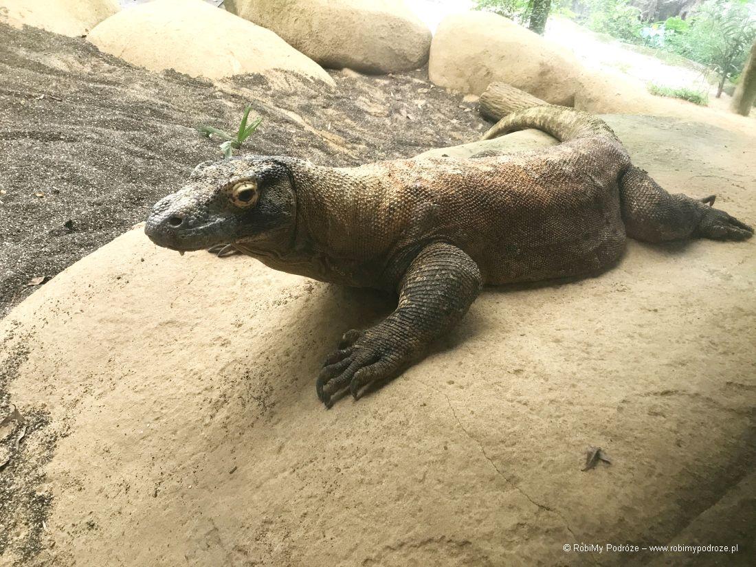 zoo wSingapurze - waran