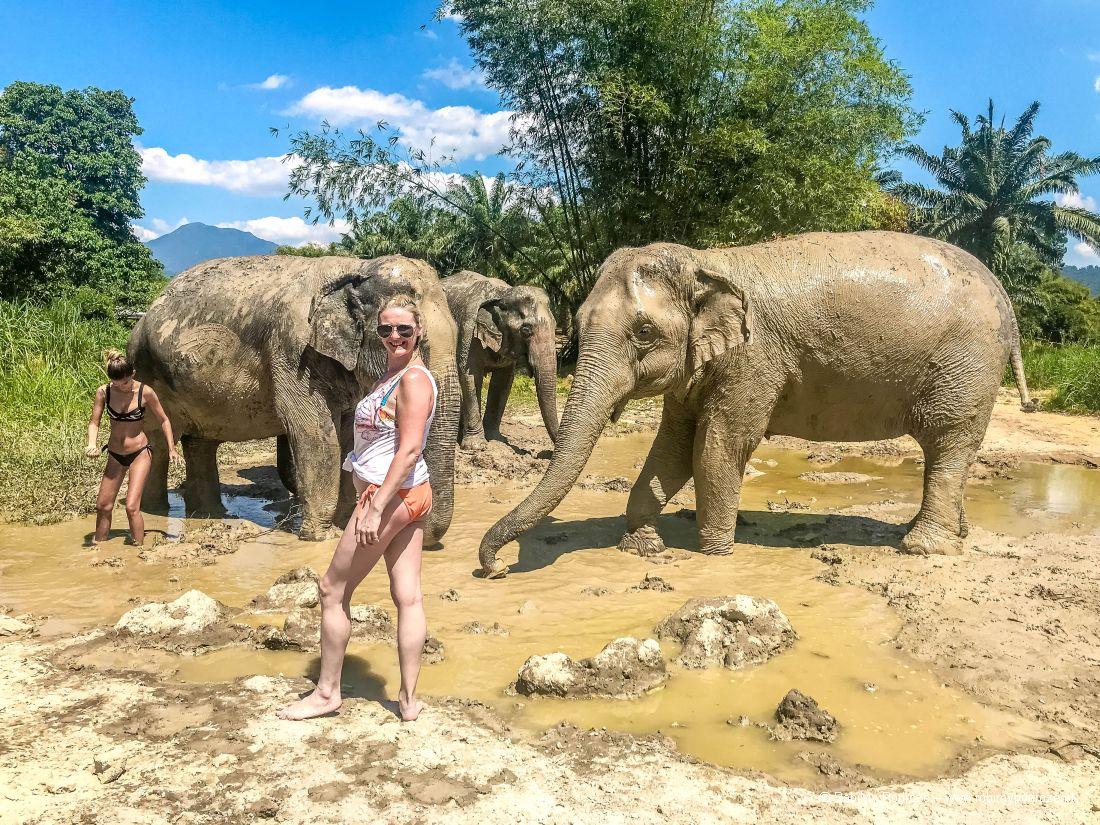 Goha iazjatyckie słonie wbłocie