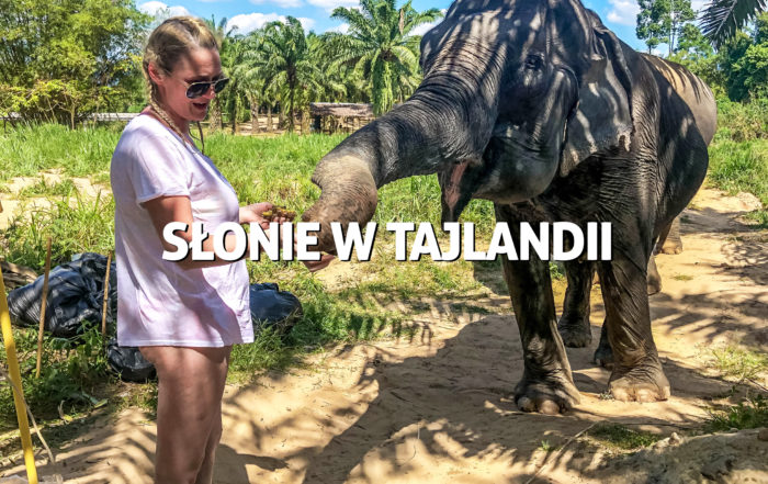 Słonie wTajlandii