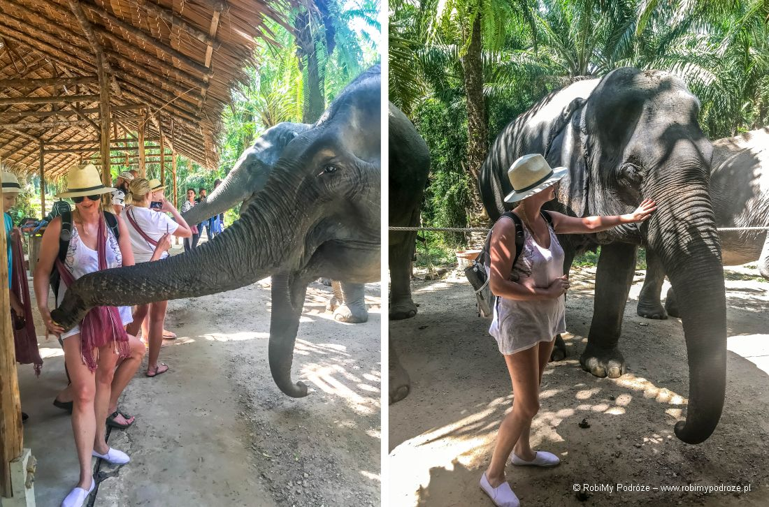 karmienie słoni wTajlandii