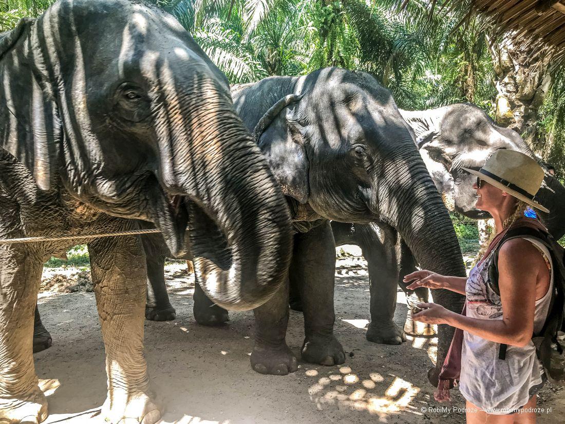 ratujmy słonie wTajlandii