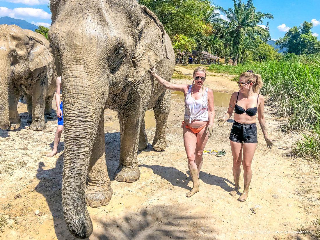 rytuały słoni wTajlandii