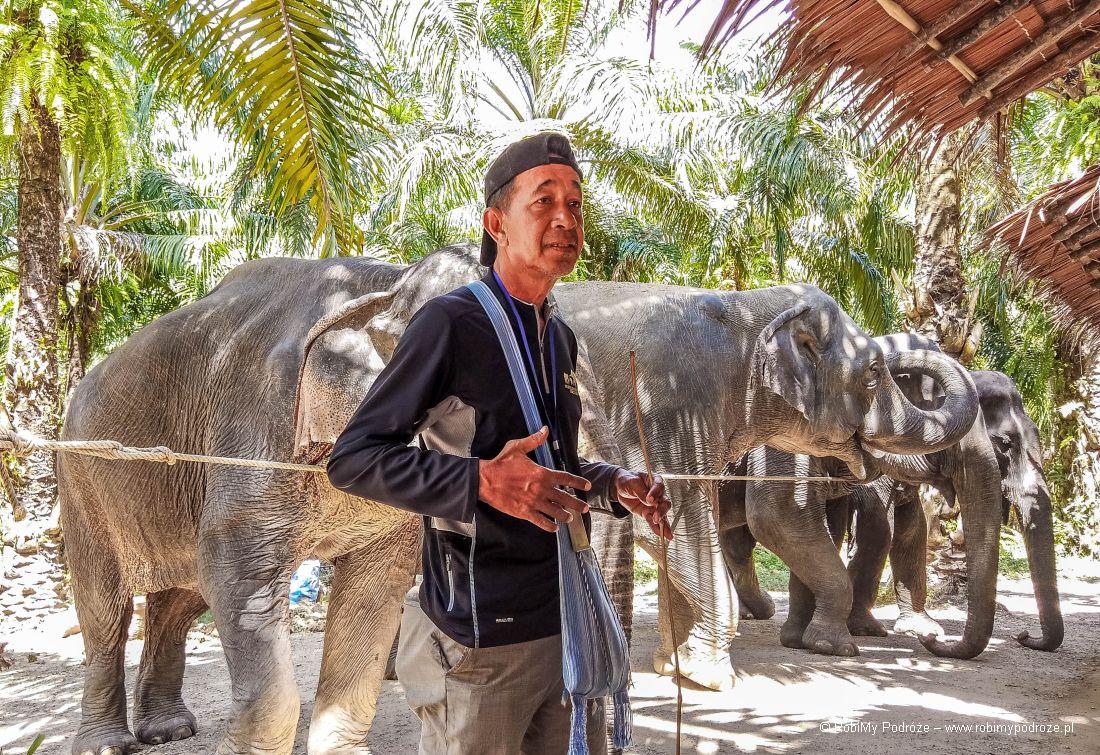 słonie wKrabi