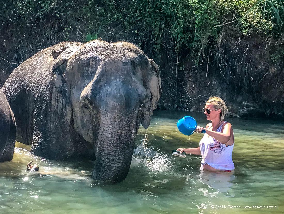 wykąpać słonia wTajlandii