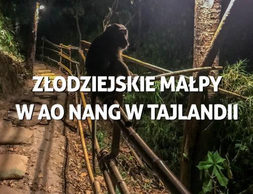Złodziejskie małpy wAo Nang wTajlandii