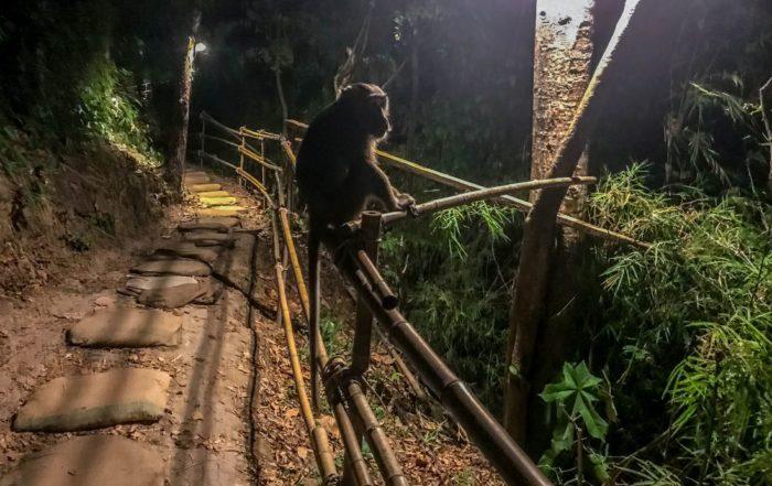małpy wAo Nang