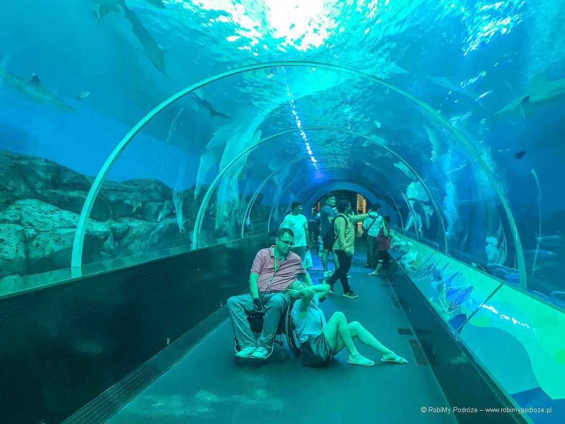 Singapur co zwiedzać - akwarium naSentosie