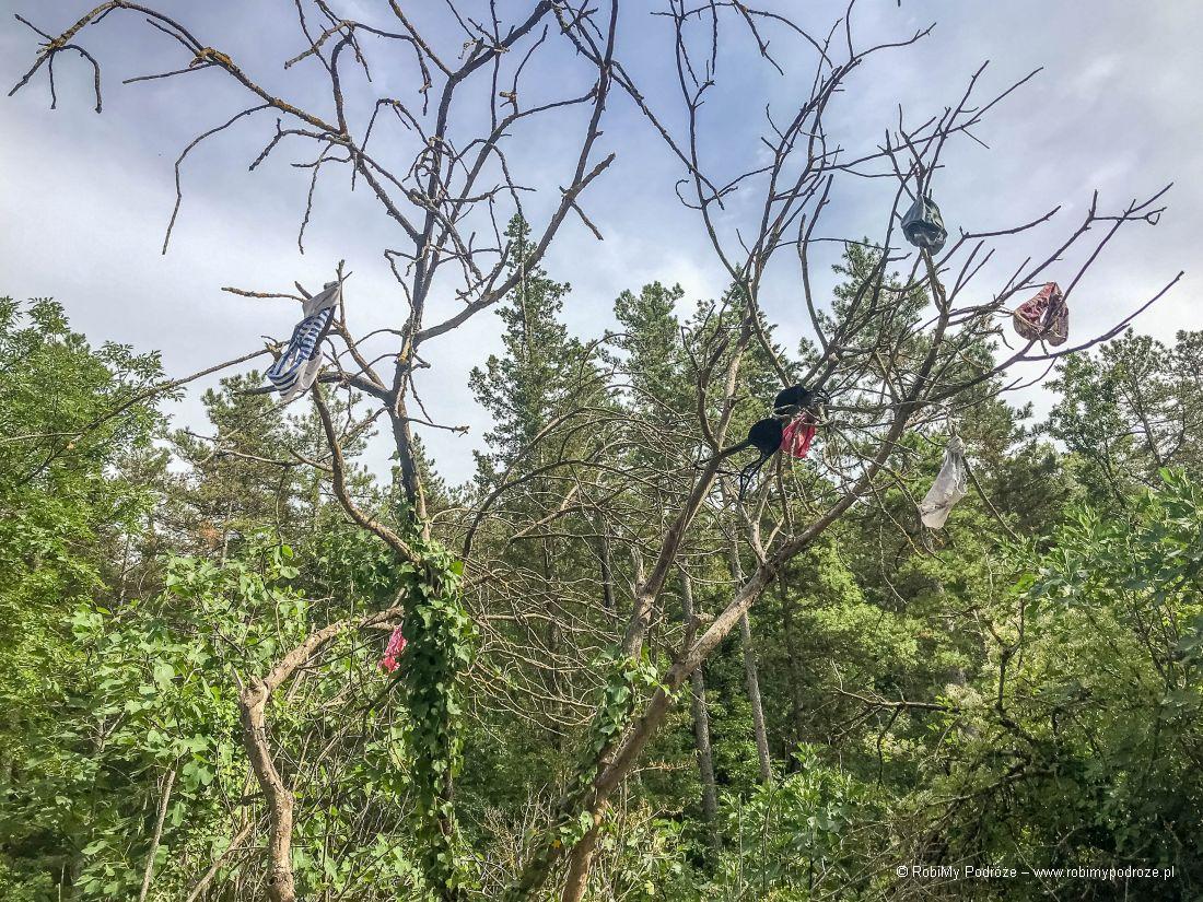 drzewo stanikowo - majtkowe
