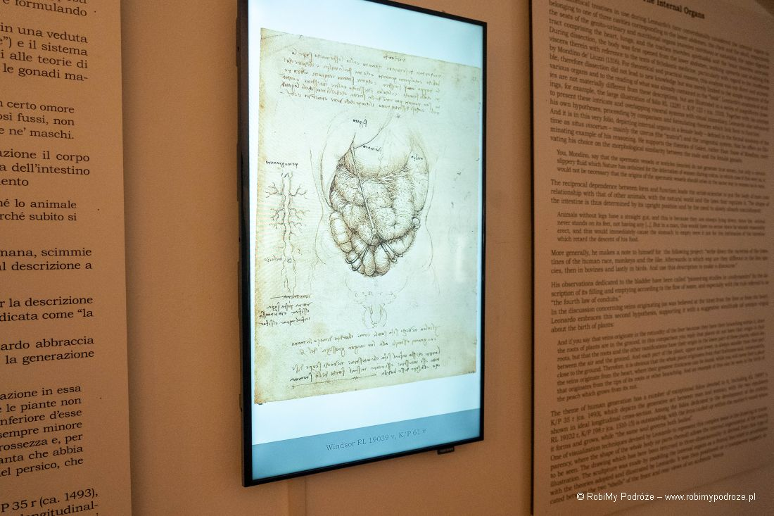 Leonardo ianatomia